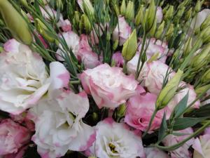 нежные бело-розовые цветы лизиантуса
