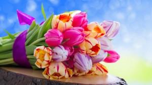Цветы. Тюльпаны.