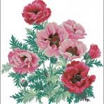 Красные и розовые маки